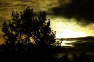 Sun Through the Dark