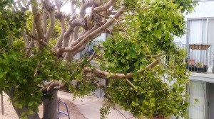 Life After a Pruning (1)