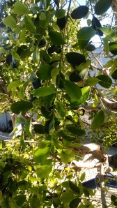 Life After a Pruning (2)
